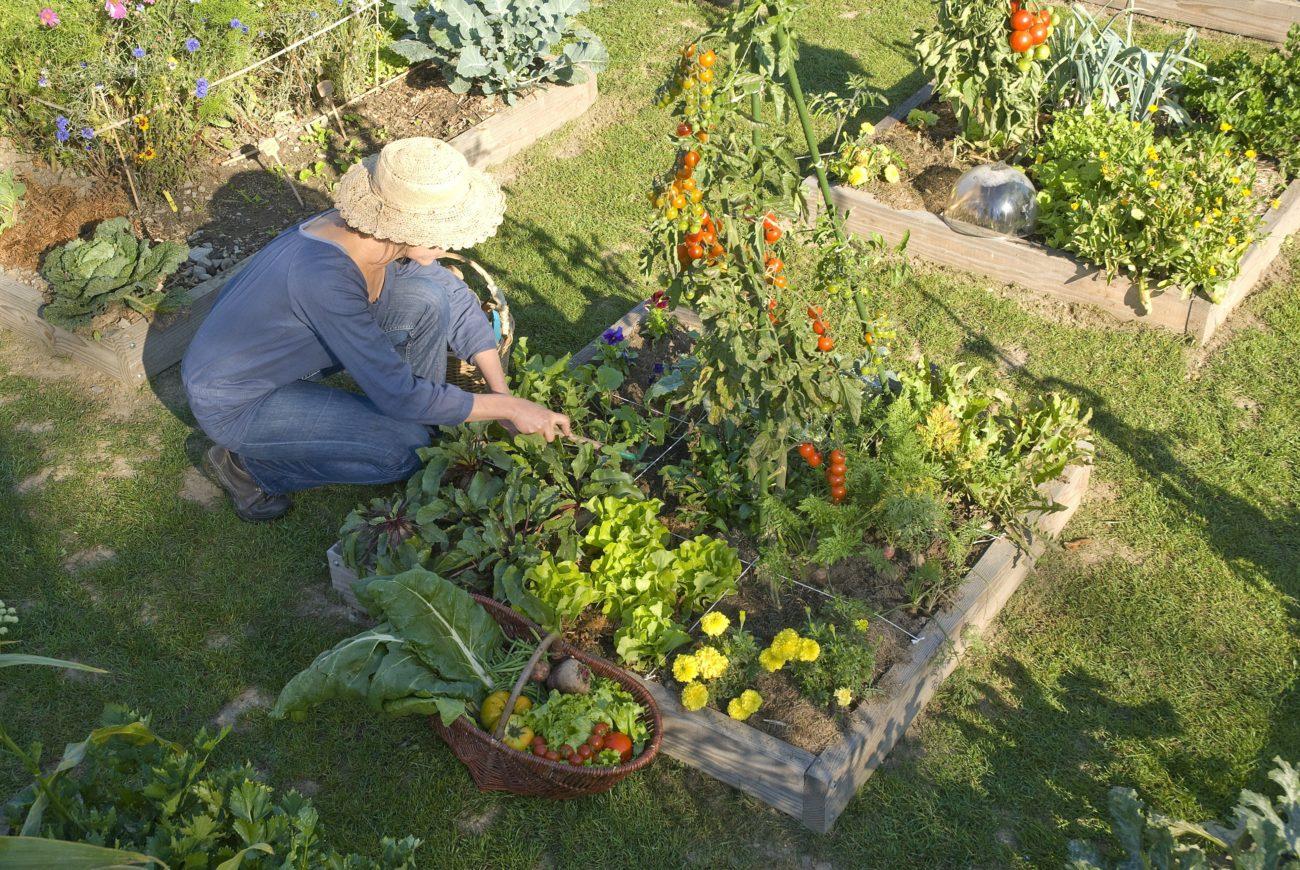 seniors jardinage