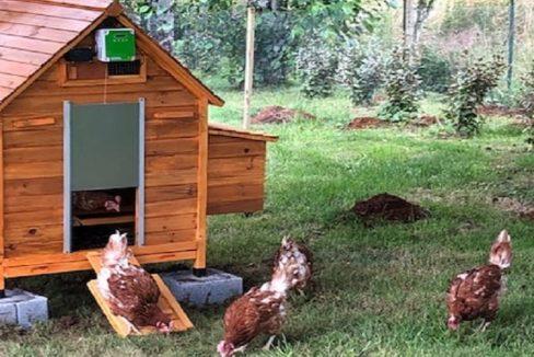 poule-residence-senior-le-clos-de-largentiere